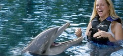 Dolphins - The friendly sea mammals