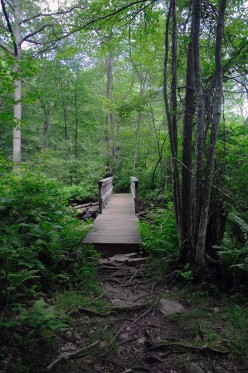Bridge on the White Trail near the north edge of the pond.