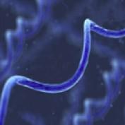 spirulinatablets profile image