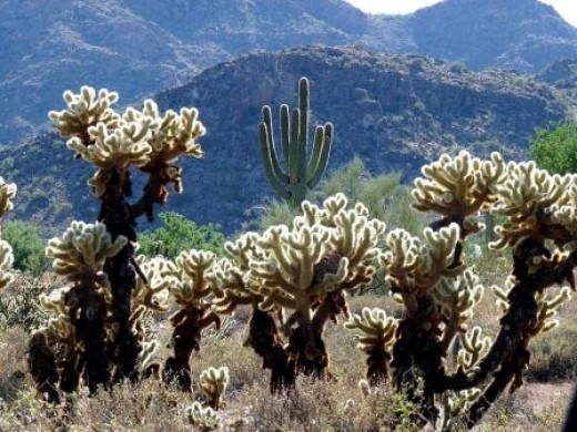 As gorgeous as it is, Arizona has more to offer than breathtaking desert beauty