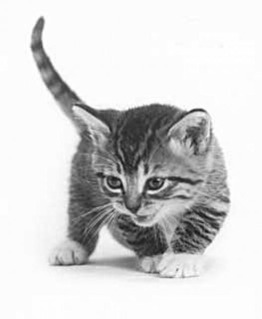sneeky kitten