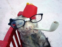 Hey, it could be worse, right? You could be a dead possum wearing a fez and glasses.