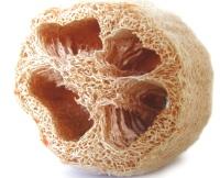 Luffa cleaned of flesh and seeds make wonderful bath sponges