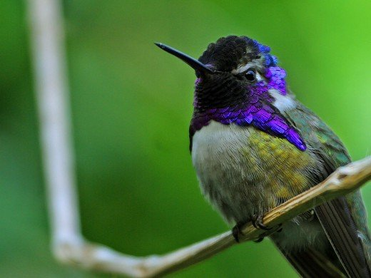 Hummingbirds are attracted to the color red, and are nectar feeding birds.