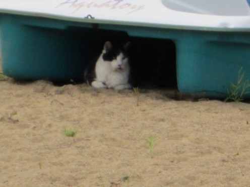 Oscar hiding under the boat!