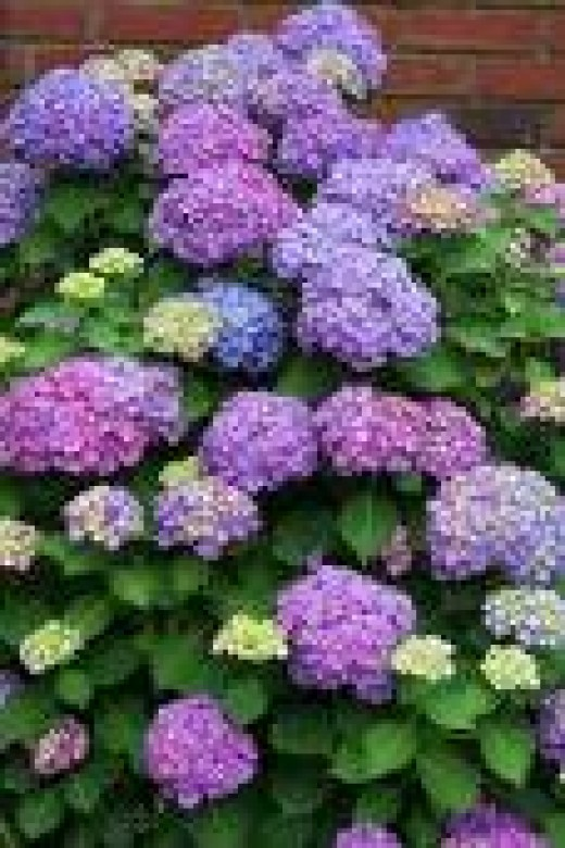 Hydrangeas, which also thrive in Shade and can do well in Rocky Soil..