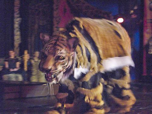 Fun activities at Circus Juventas.
