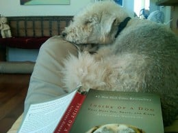 """Duke asleep on my lap as I read and ponder, """"Inside of a Dog."""""""