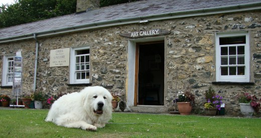 Basking: A dog rests in front of Alun Davies' art gallery in Porthgain