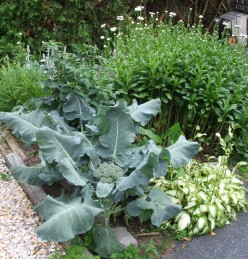 Front Yard Garden Beds Combining Vegetables & Flowers