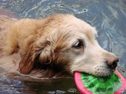 Great Websites For Dog Lovers - Reviews and Ratings