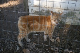 BC  in his outdoor cattery near the entry way to his apartment which he shared with Handsome