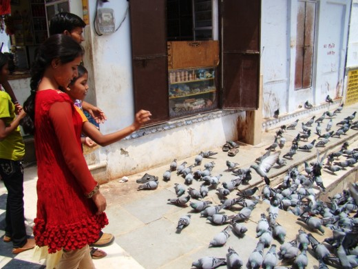 Feeding the pigeons at Puskar