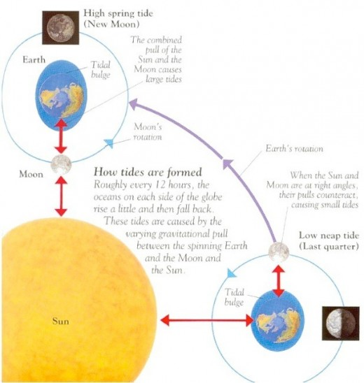 This diagram shows how the sun, moon and earth interact to produce not only the nearly twice daily tides, but events like the spring tide.