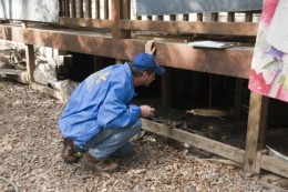 An inspector checking the crawl space of a home after a flood.