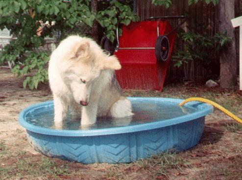 All Rights Reserved Lulu Author  SM Rodgers, Legacy of the Skull Master Wolfer enjoying his swimming pool.