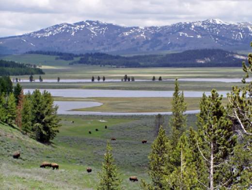 Hayden Valley Yellowstone National Park