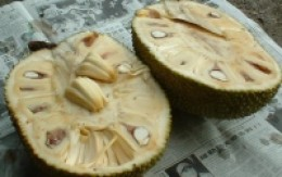 jackfruit split
