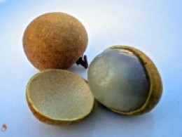 Longan fruit split