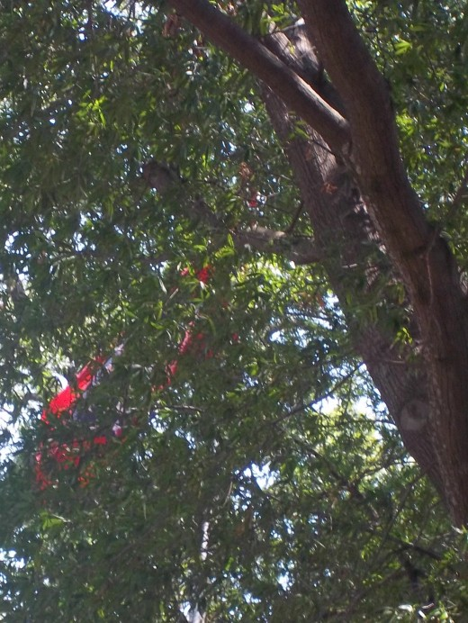 Arkansas State flag blowing in the trees
