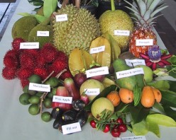 Exotic Peculiar Fruits
