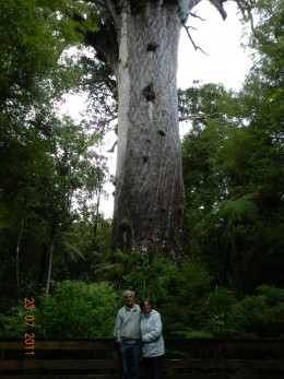 Standing in front of one of the majestic Kauri trees.