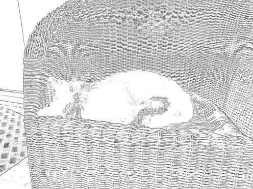 Picture of my cat made while using the drawing filter