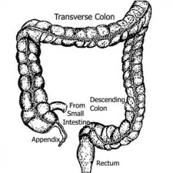 Colon Cleanse Products: Good Plan or a Scam?