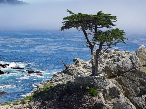 Lone Cypress at the Pacific Ocean.
