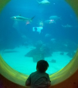 The little one looks for sharks in Gill's Clubhouse.