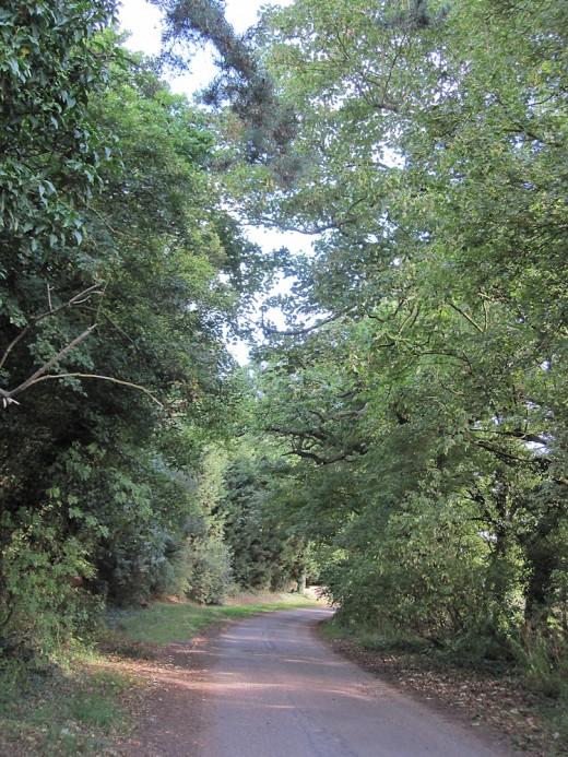 The Lane to Nowhere