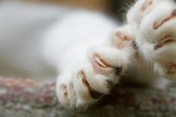 What You Should Know About Declawing