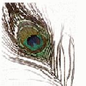 Apjav profile image