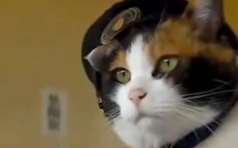 Tama Cat