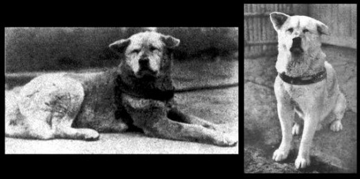 Hachiko - a dog's story