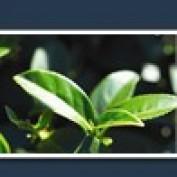 khinsander profile image