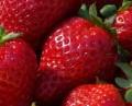 good-looking strawberries