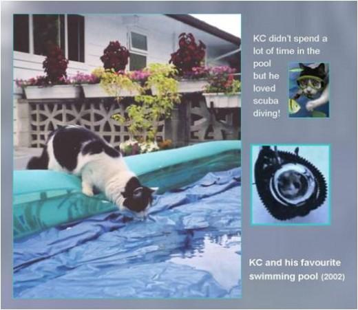 Scuba diving cat?