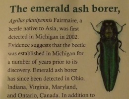 From the brochure: What is the Emerald Ash Borer?