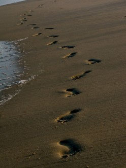 Who Wrote Footprints In The Sand?