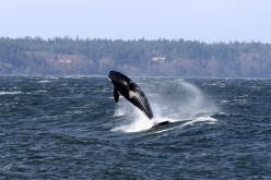 Another cool sight that is often seen on Whidbey