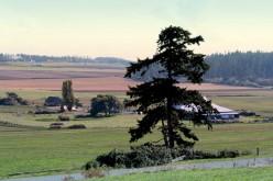 Coupeville Prairie - Ebby's Landing