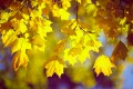 Mabon: The Autumnal Equinox & How to Celebrate