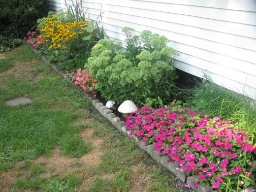 Impatiens, autumn sedum, and black eyed susan