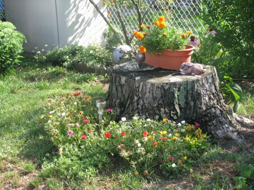 Portulaca below, marigolds above
