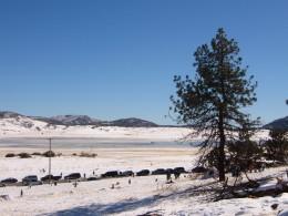 Winter Snow,  Lake Cuyamaca