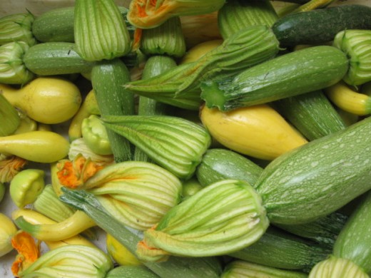 Summer squash from La Vista Farm