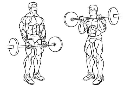 Barbells curls can be performed at home