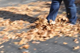 Take off your shoes and let the leaves crunch under your feet. It might set the ideas in motion.