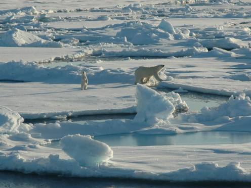 Polar Bear and cub walk within 200m of a ship near Point Barrow in the Beaufort Sea.